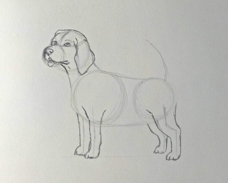 Lerne, wie du einen Hund in wenigen Schritten zeichnest