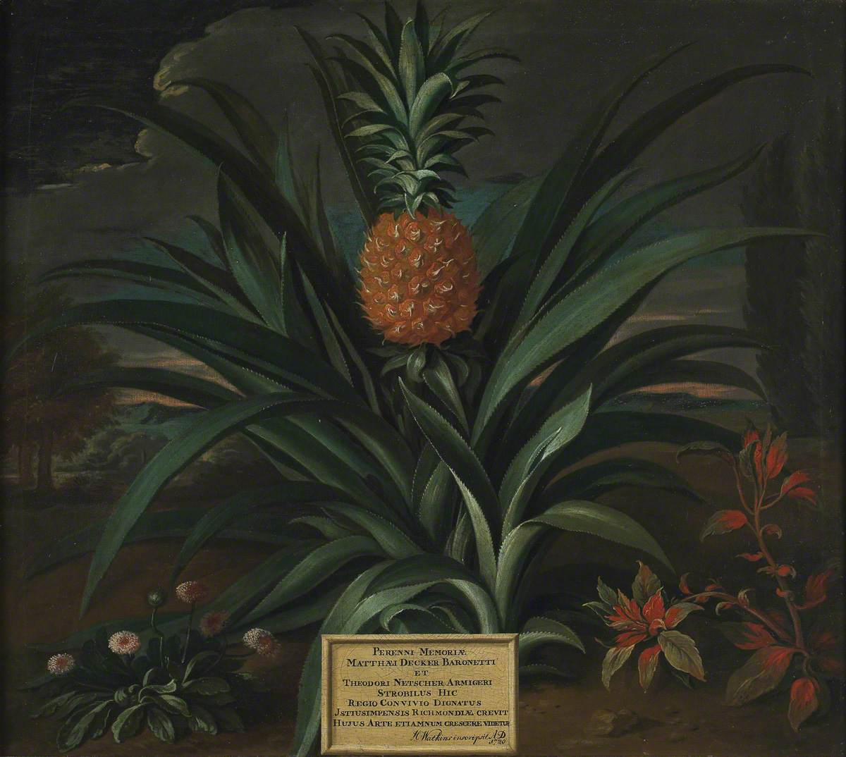 Netscher, Theodorus, 1661-1732; Pineapple Grown in Sir Matthew Decker's Garden at Richmond, Surrey